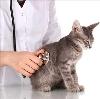 Ветеринарные клиники в Думиничах